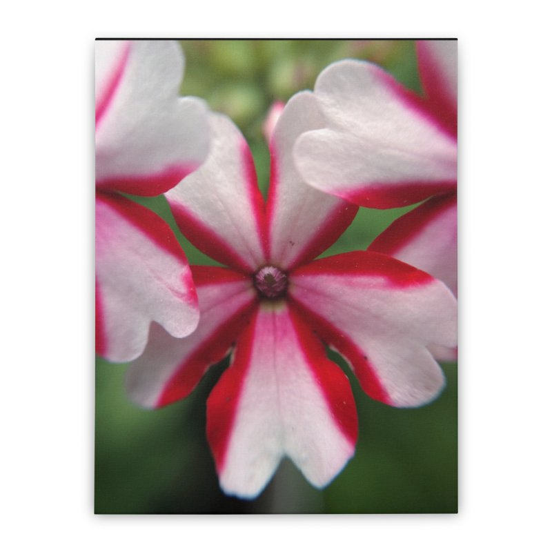 Pink Stripes 1 Home Stretched Canvas by Katie Schutte Art