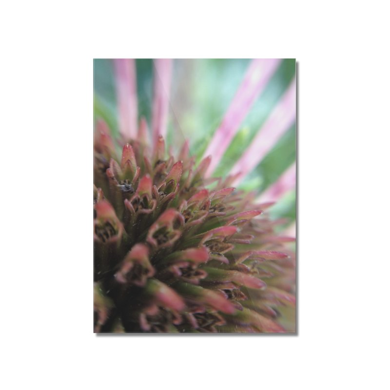 Coneflower Home Mounted Acrylic Print by Katie Schutte Art