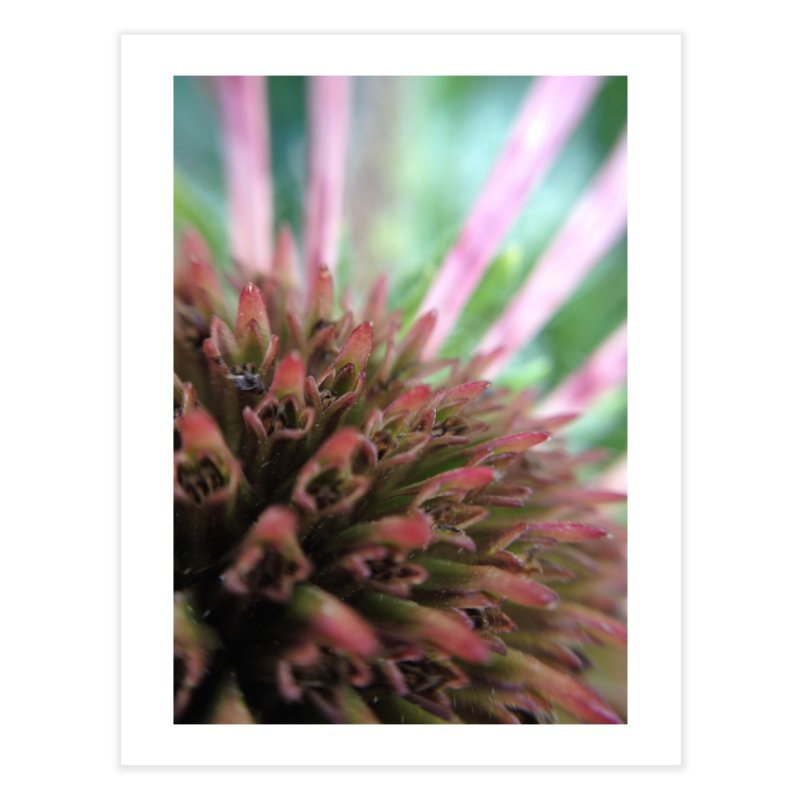 Coneflower Home Fine Art Print by Katie Schutte Art