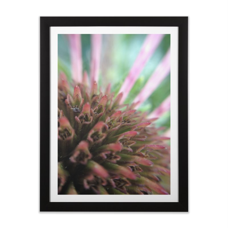 Coneflower in Framed Fine Art Print Black by Katie Schutte Art