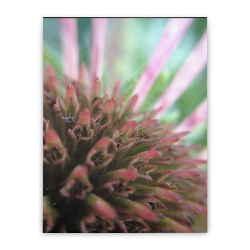 Coneflower Home Stretched Canvas by Katie Schutte Art