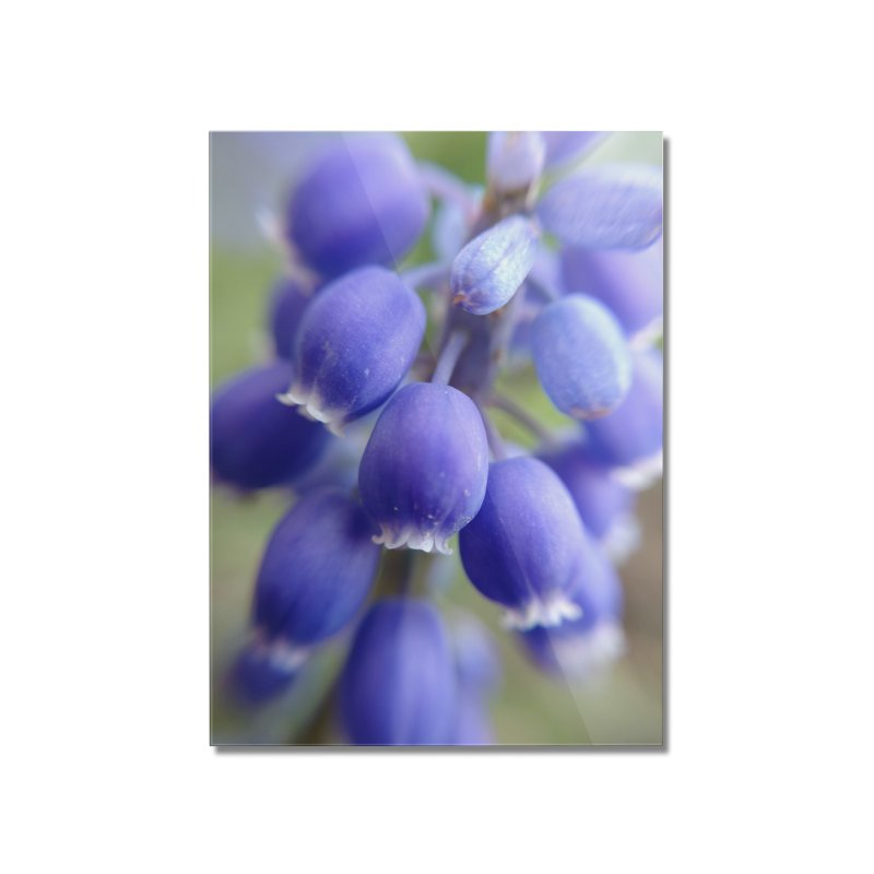 Purple Bells Home Mounted Acrylic Print by Katie Schutte Art