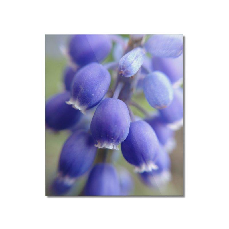 Purple Bells Home Mounted Acrylic Print by Katie Schutte Art