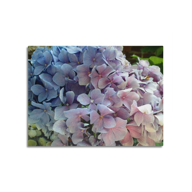 Hydrangea Home Mounted Aluminum Print by Katie Schutte Art