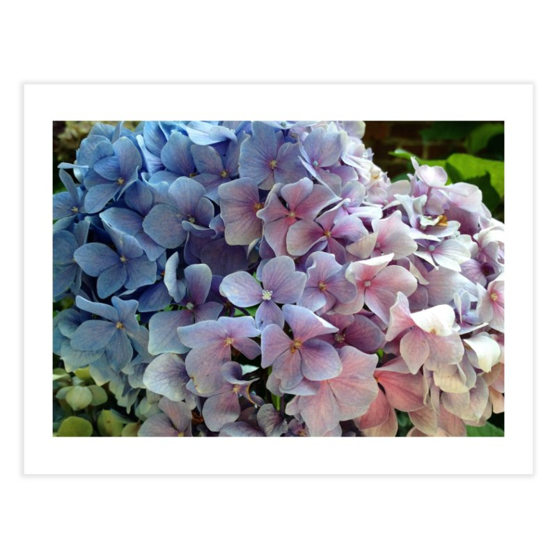 Hydrangea Home Fine Art Print by Katie Schutte Art