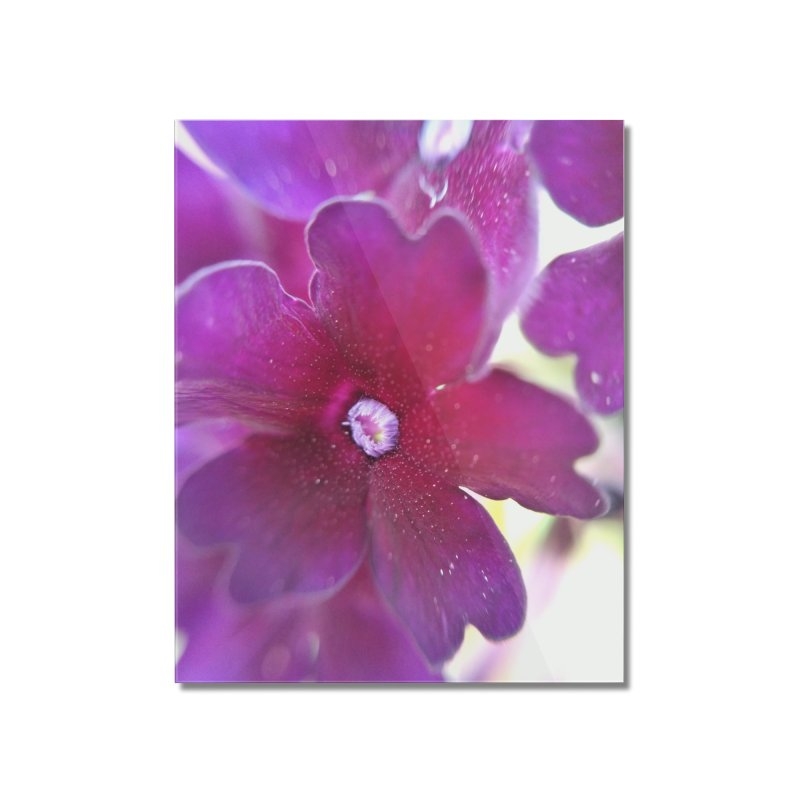 Purple Flower Home Mounted Acrylic Print by Katie Schutte Art