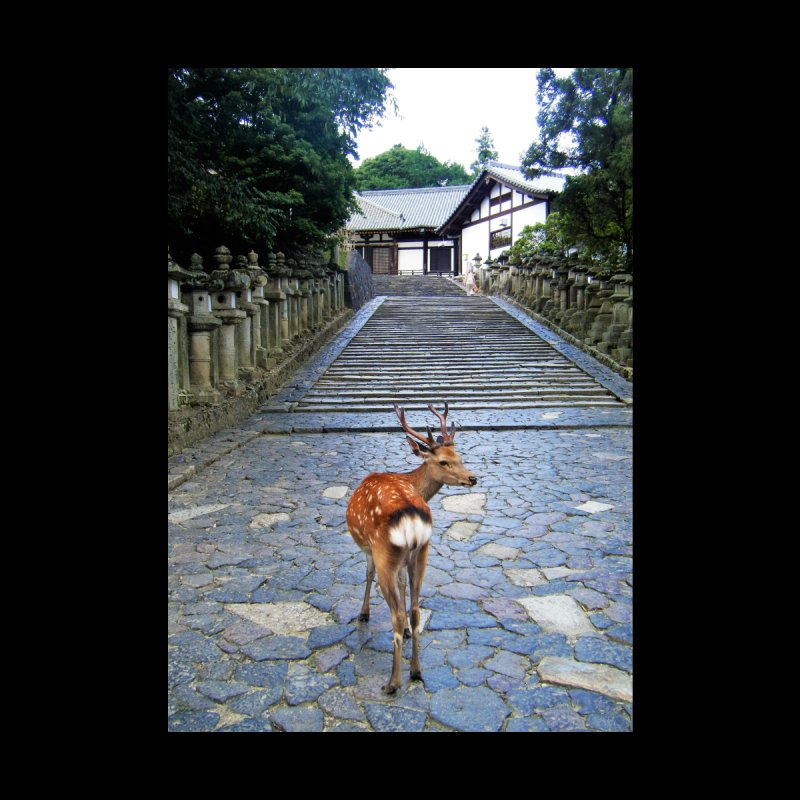 Nara 1 Home Mounted Aluminum Print by Katie Schutte Art