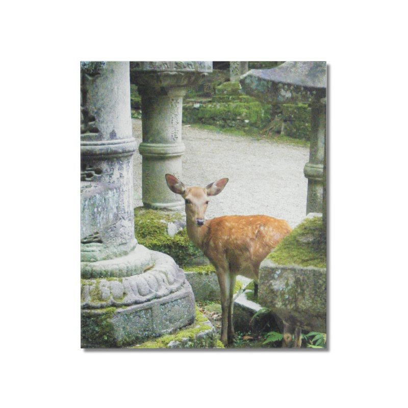 Nara 2 Home Mounted Acrylic Print by Katie Schutte Art
