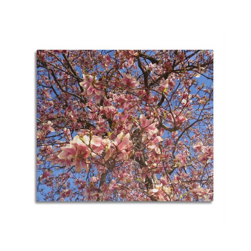 Spring Tree Home Mounted Aluminum Print by Katie Schutte Art