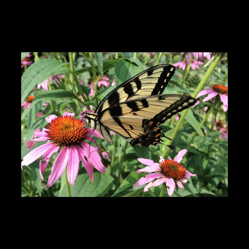 Butterfly Home Mounted Aluminum Print by Katie Schutte Art