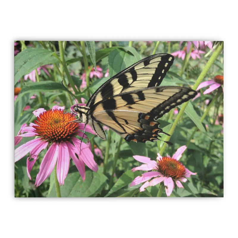 Butterfly Home Stretched Canvas by Katie Schutte Art