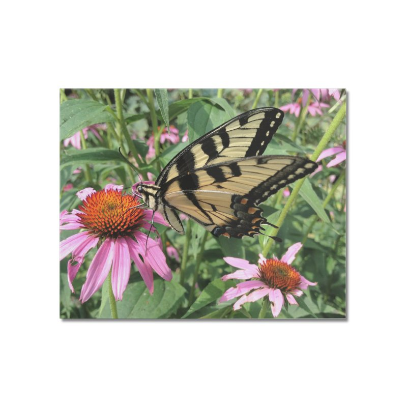 Butterfly Home Mounted Acrylic Print by Katie Schutte Art