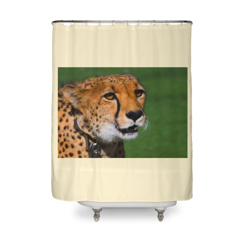 Cheetah from Safari Park in San Diego Home Shower Curtain by LlamapajamaTs's Artist Shop