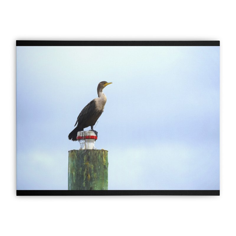Juvenile Cormorant on Tracey's Creek Home Stretched Canvas by MD Design Labs's Artist Shop
