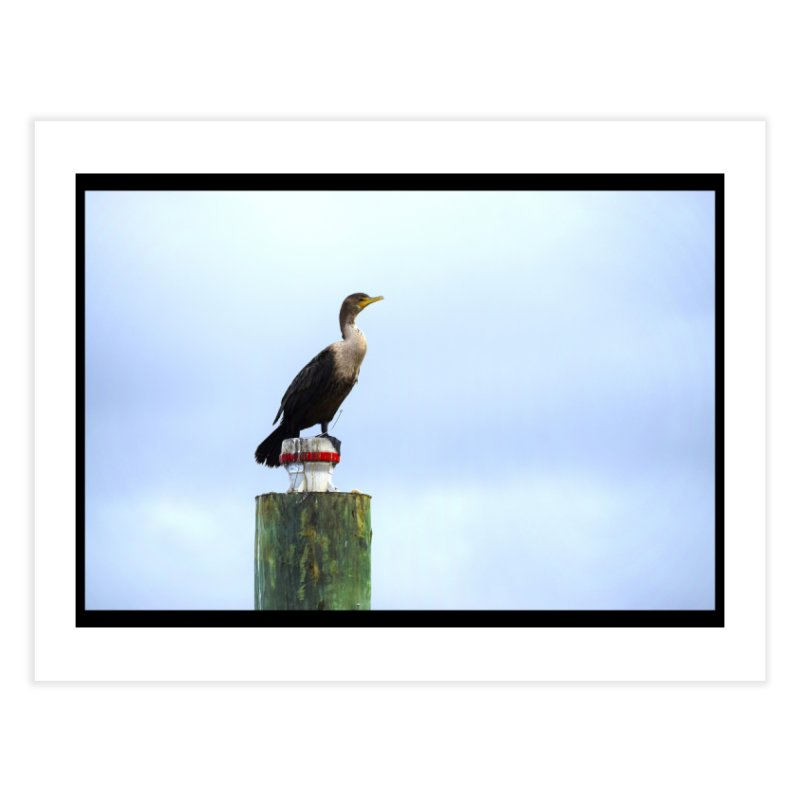 Juvenile Cormorant on Tracey's Creek Home Fine Art Print by MD Design Labs's Artist Shop