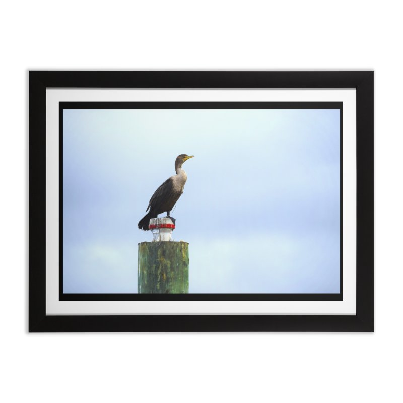 Juvenile Cormorant on Tracey's Creek Home Framed Fine Art Print by MD Design Labs's Artist Shop