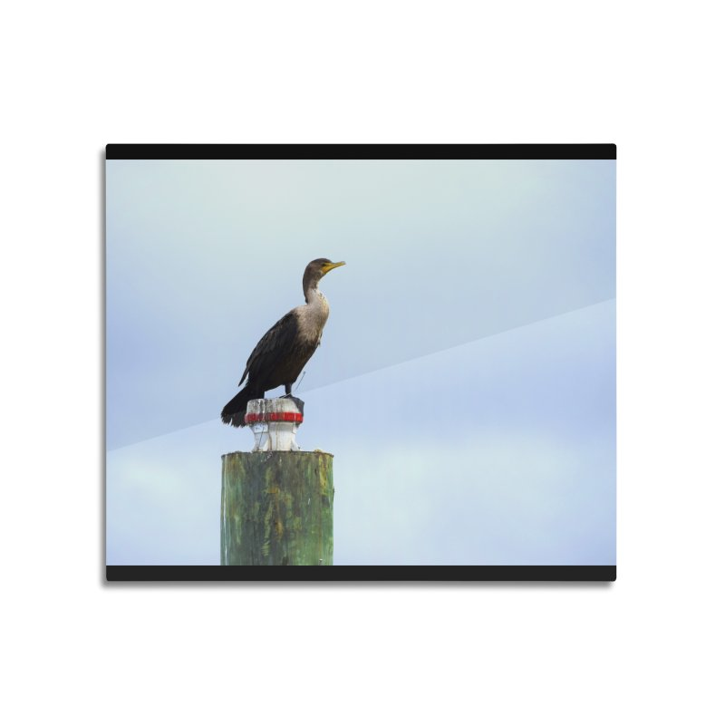 Juvenile Cormorant on Tracey's Creek Home Mounted Aluminum Print by MD Design Labs's Artist Shop