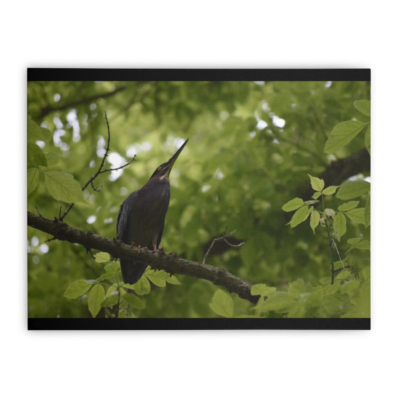 Green Heron at Herrington Harbour North Home Stretched Canvas by MD Design Labs's Artist Shop