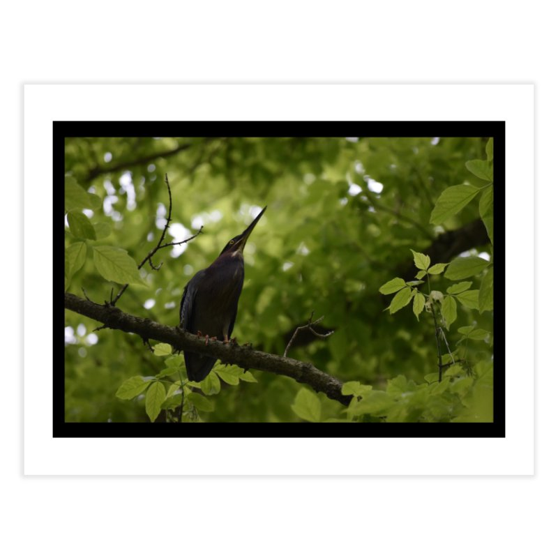 Green Heron at Herrington Harbour North Home Fine Art Print by MD Design Labs's Artist Shop