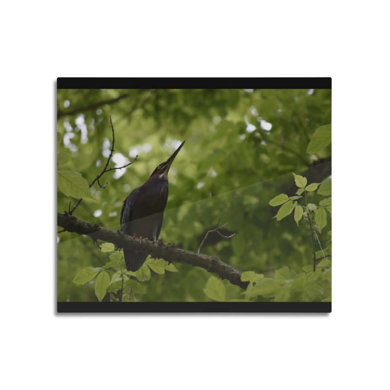 Green Heron at Herrington Harbour North Home Mounted Aluminum Print by MD Design Labs's Artist Shop