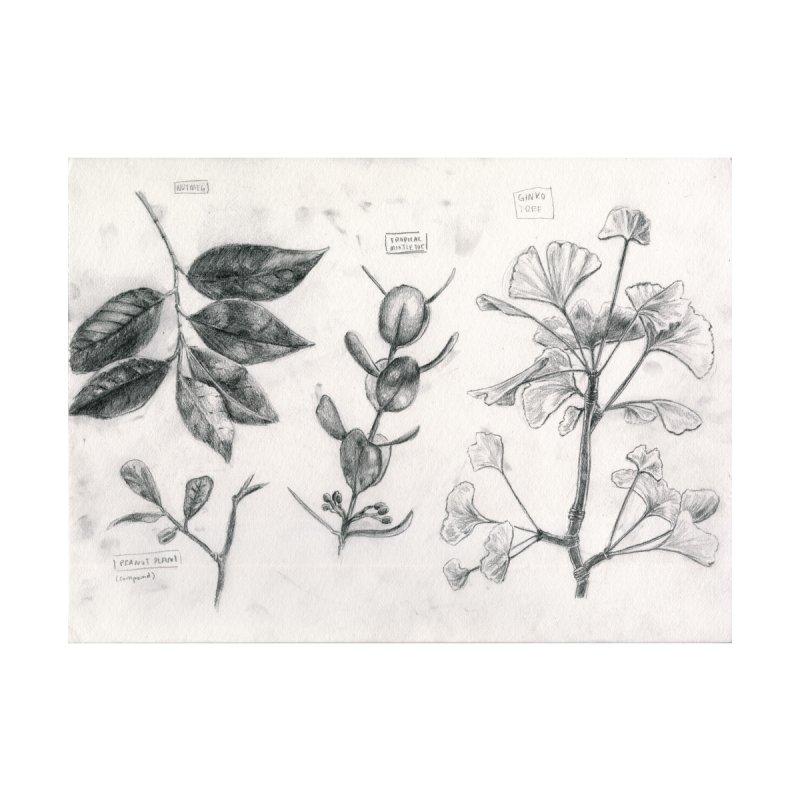 Peanut Plant by Madeleine Hettich Design & Illustration