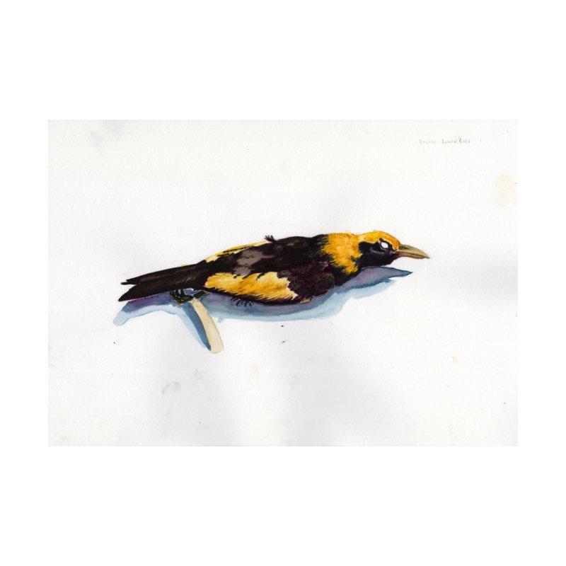 Regent Bower Bird by Madeleine Hettich Design & Illustration