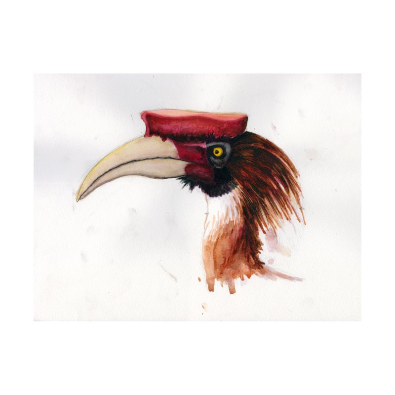 Hornbill Head by Madeleine Hettich Design & Illustration
