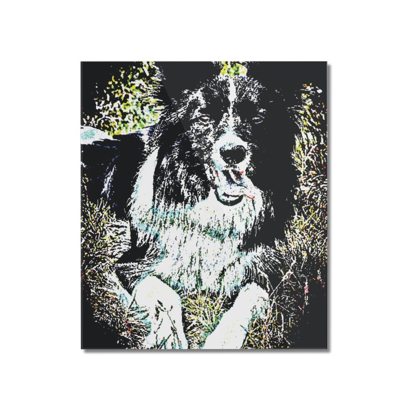 Border Collie Home Mounted Acrylic Print by MariecorAgravante's Artist Shop