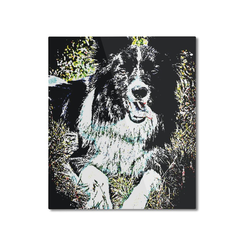 Border Collie Home Mounted Aluminum Print by MariecorAgravante's Artist Shop