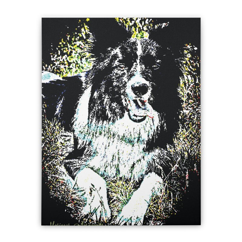 Border Collie Home Stretched Canvas by MariecorAgravante's Artist Shop