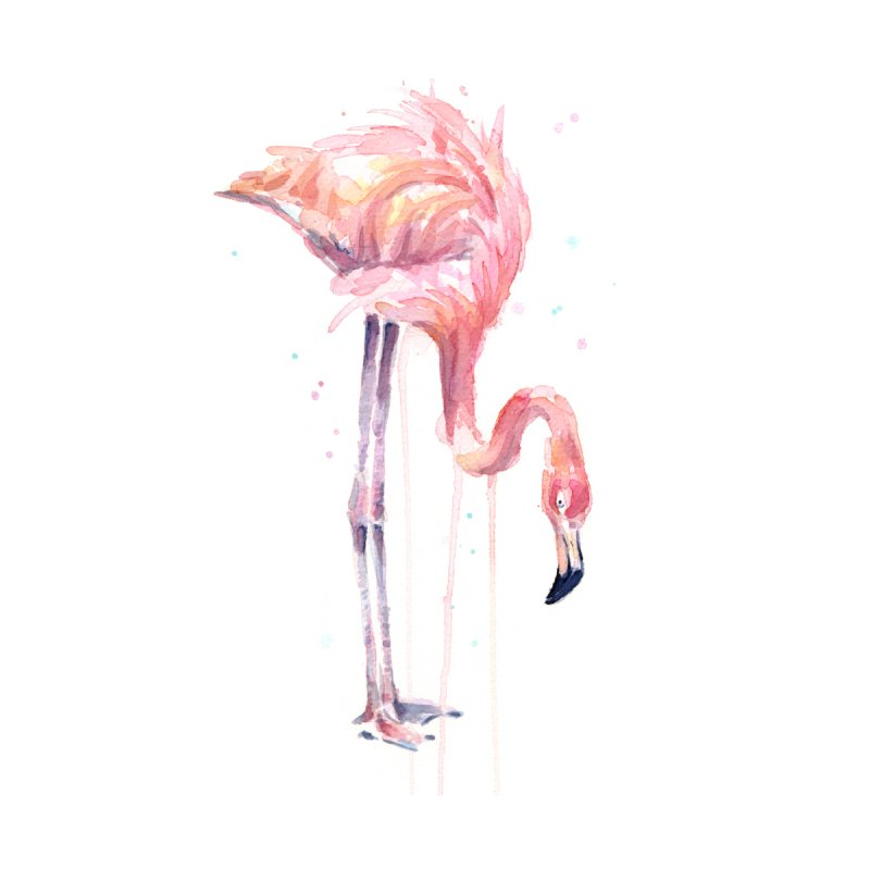 Flamingo Watercolor by Art by Olga Shvartsur