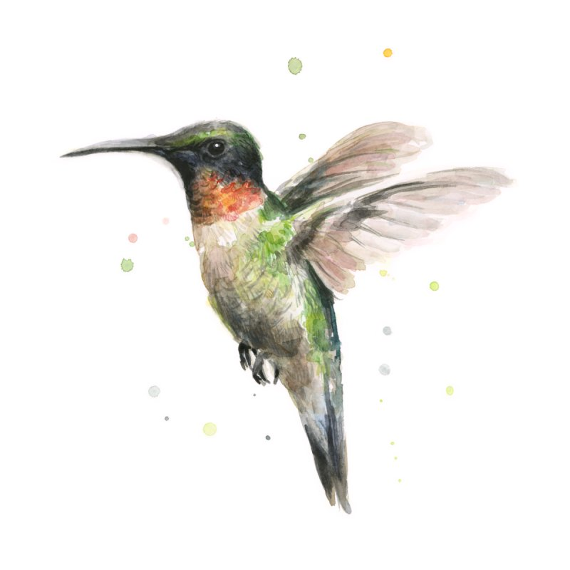Hummingbird Watercolor by Art by Olga Shvartsur