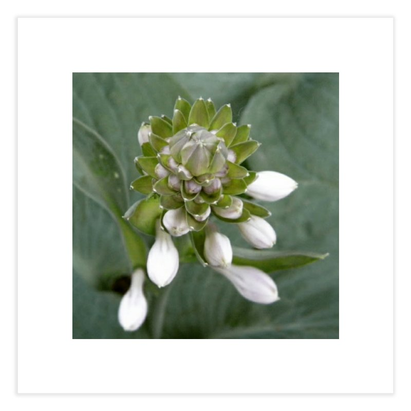 Hosta Home Fine Art Print by RNF's Artist Shop
