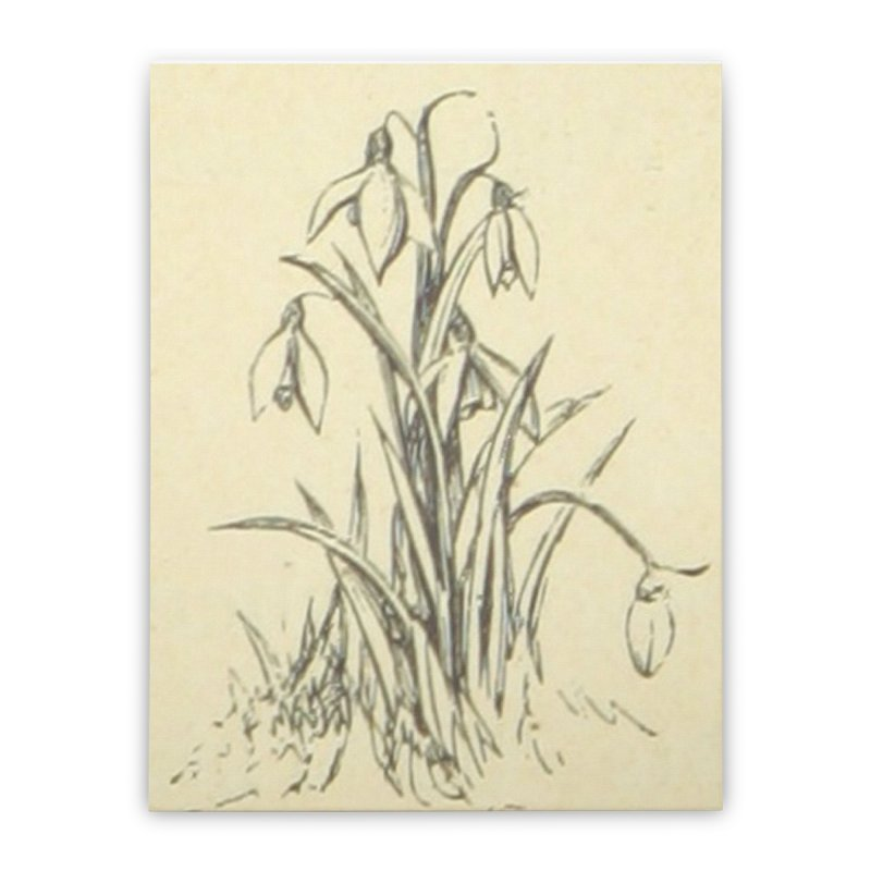 Floral Home Stretched Canvas by RNF's Artist Shop