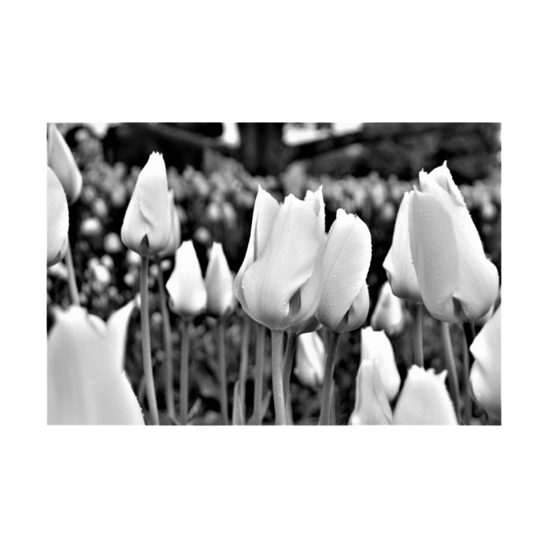 Grayscale tulips None  by Soulstone's Artist Shop