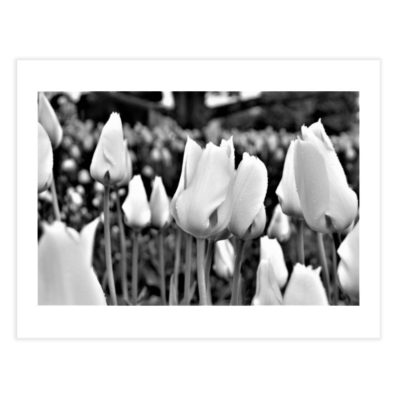 Grayscale tulips   by Soulstone's Artist Shop
