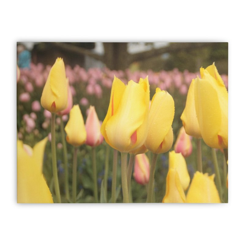 Yellow Tulips Home Stretched Canvas by Soulstone's Artist Shop