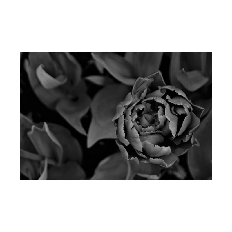 grayscale rose None  by Soulstone's Artist Shop