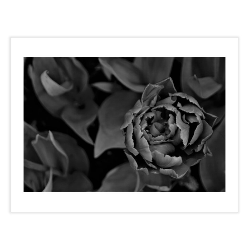 grayscale rose Home Fine Art Print by Soulstone's Artist Shop