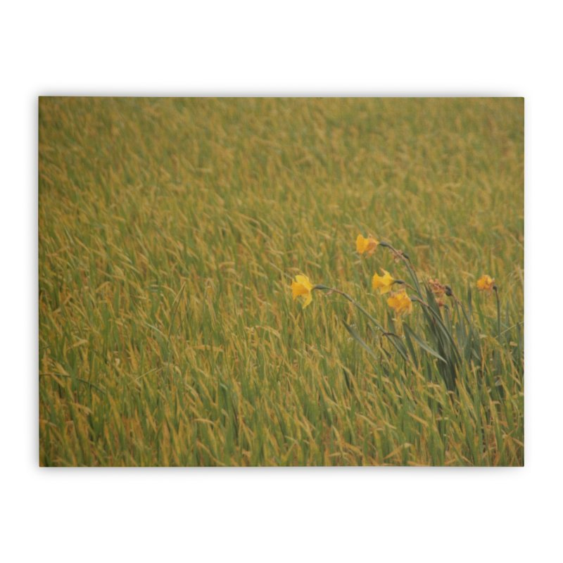 Field Home Stretched Canvas by Soulstone's Artist Shop