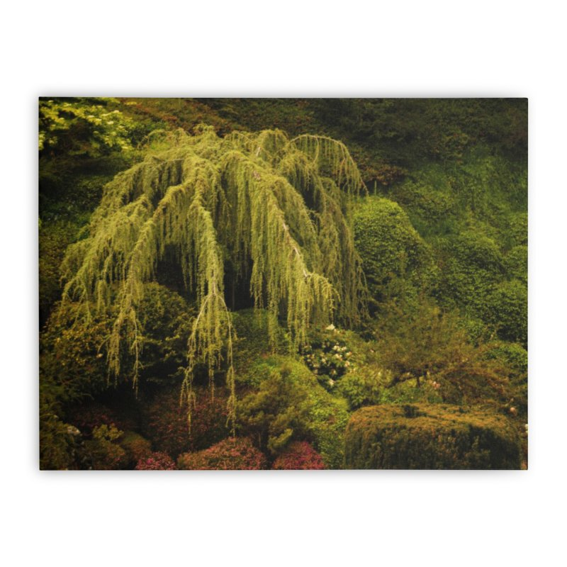 the willow tree Home Stretched Canvas by Soulstone's Artist Shop
