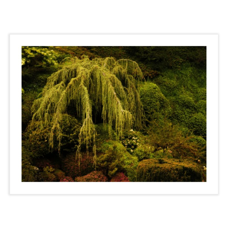 the willow tree Home Fine Art Print by Soulstone's Artist Shop