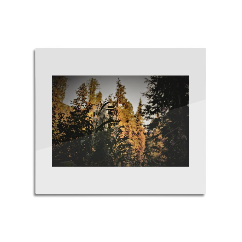 Backlit Fluff Home Mounted Acrylic Print by Soulstone's Artist Shop