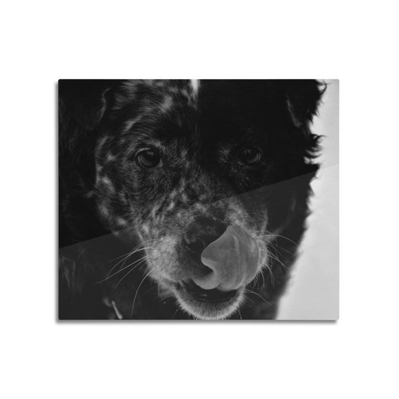Dog Home Mounted Aluminum Print by Soulstone's Artist Shop