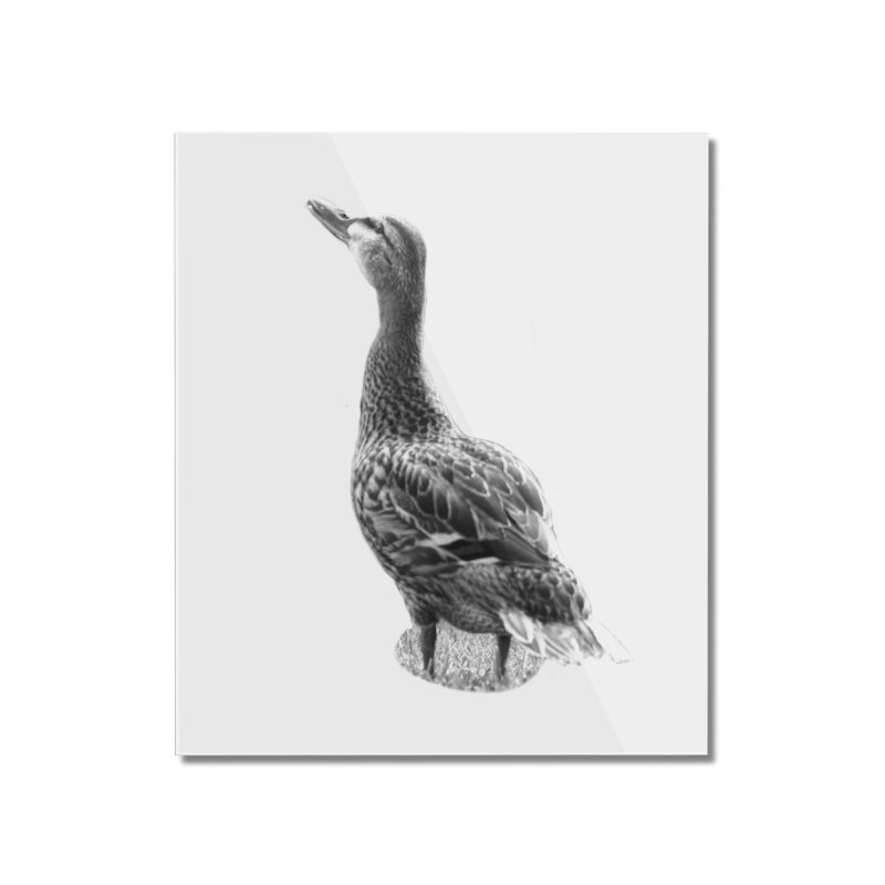 Duck looking up - Black and White Home Mounted Acrylic Print by Make a statement, laugh, enjoy.
