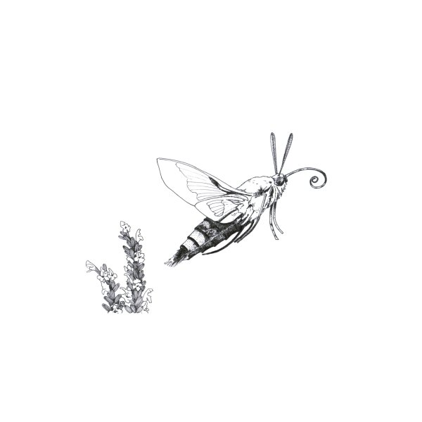 Design for Hummermoth Finna to Fly