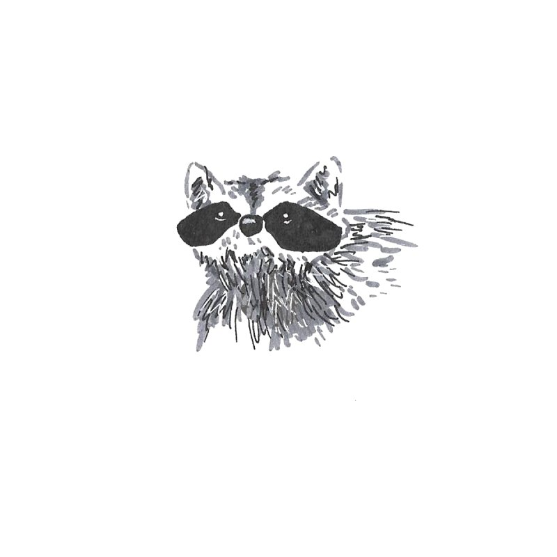 Cute Raccoon Hand-drawn Women's Pullover Hoody by The Wilderness Store