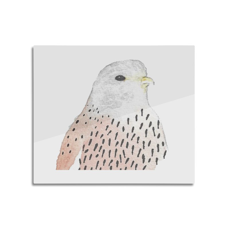 Watercolor Kestrel Home Mounted Aluminum Print by The Wilderness Store