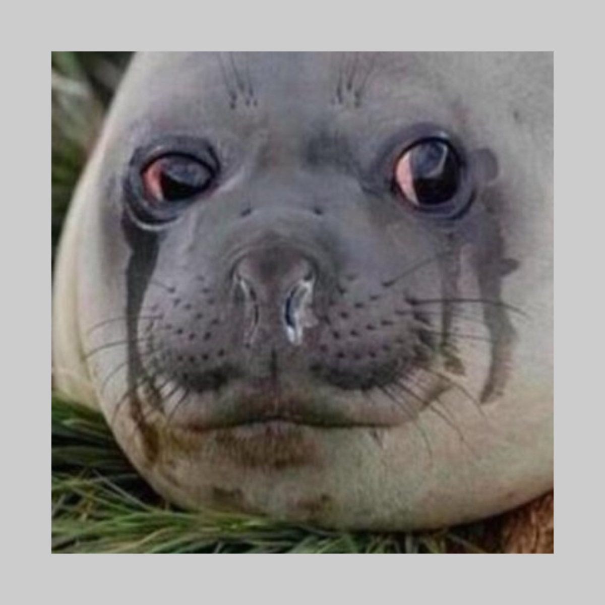 Crying Seal Products