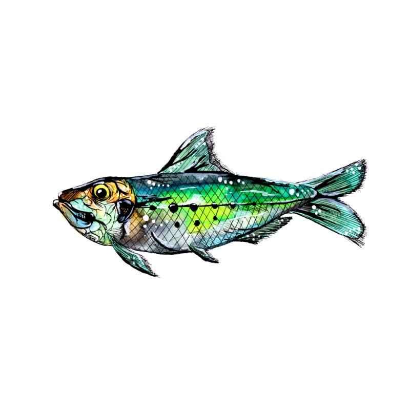 Green Sardine Watercolor by ZeichenbloQ's Artist Shop